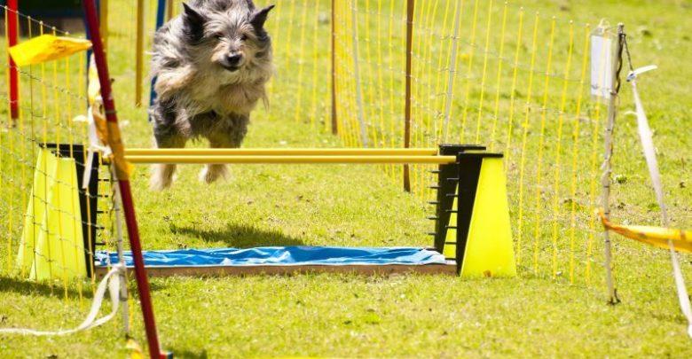 Photo of Hundeartikler – køb dem på nettet