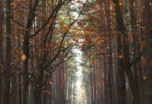 Photo of Sluk for skærmen og kom ud i naturen